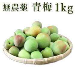 熊野のご褒美紀州南高梅青梅1kg無化学肥料無農薬梅干し梅酒・梅ジュース用