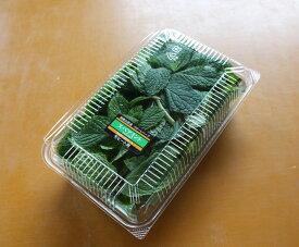 スペアミント 50g モヒート用 フレッシュハーブ 食用 和歌山県産葉が大きく匂いが濃くてモヒートに最適彩り屋