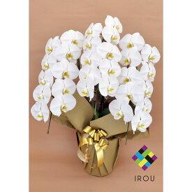 胡蝶蘭 ホワイト 白 3本立ち 27輪以上 花 ギフト お祝い 花 プレゼント 贈り物 お供え お誕生日 お供え 開店祝い 開業祝い 移転祝い 還暦 仏花 フラワーギフト 母の日ギフト