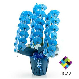 カラー 胡蝶蘭 ブルー 青 3本立ち 27輪以上 花 ギフト お祝い 花 プレゼント 贈り物 お供え お誕生日 お供え 開店祝い 開業祝い 移転祝い 還暦 仏花 フラワーギフト 母の日ギフト