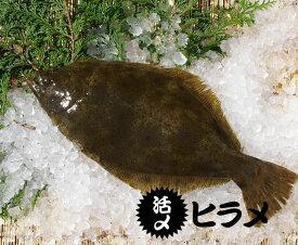 活ヒラメ 捌いてお届けします 800g スキンレス 三重県産(養殖)[魚介類]
