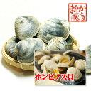 活ホンビノス貝 中サイズ  10個入り 約1kg[貝類]