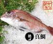 真鯛捌いてお届けします1.2kgスキンレス、アラ下処理済(三重県産養殖)[魚介類]
