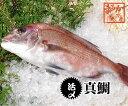 真鯛 捌いてお届けします 1.2kg スキンレス、アラ下処理済(三重県産 養殖)[魚介類]
