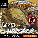 活赤あわび(メガイアワビ)Lサイズ 250g〜290g 1枚[あわび]