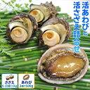 三重県伊勢志摩産海女漁の特選活貝詰合せ〈活鮑(あわび)大サイズ2個で500g 活さざえ1kg〉 送料無料 サザエの個数が…