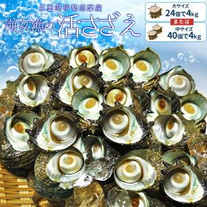 三重県伊勢志摩産海女漁の天然活さざえ4kg 送料無料 サザエのサイズと個数が選べます 敬老の日 ギフト