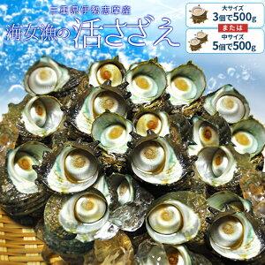 三重県伊勢志摩産海女漁の天然活さざえ500g サザエのサイズと個数が選べます 敬老の日 ギフト