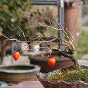 盆栽素材 ロウヤガキ(老爺柿) 4号(12cm) 【盆栽 苗】【好日性植物】【苔玉素材】【小山飾り素材】【ローヤガキ】