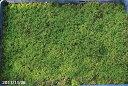 【京の苔】養生したヒメハイゴケ(特選ハイゴケ) 大トレー(57×38cm)【夏半日陰のコケ】【戸外栽培用の苔玉】【苔テラリウム】【苔盆栽…