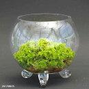 BBGガラス(BBG-154)【テラリウム/苔/コケ】【多肉植物鉢・ラン科植物鉢】