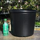 花ハスビニールポット12号(36cm)(底穴無)持ち手つき【中型容器以上栽培品種向き】【水生植物用】【植木鉢】