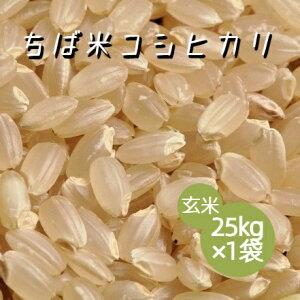 米 令和2年産 ちば米 コシヒカリ 玄米 25kg×1袋 本州四国 送料無料 綺麗仕上 業務用 大家族用 小分け不可 簡易包装