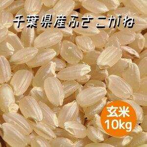 米 令和2年産 ふさこがね 玄米 10kg 本州四国 送料無料 綺麗仕上 精米無料 紙袋