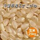 新米 米 令和2年産 ふさこがね 玄米 25kg 本州四国 送料無料 綺麗仕上 精米無料 小分け可 30kg ⇒25kg へ変更
