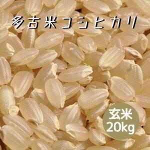 米 令和2年産 多古米 コシヒカリ 玄米 20kg 本州四国 送料無料 綺麗仕上 精米無料 紙袋