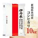 精米 10kg 令和元年産 伊丹米 新潟県魚沼産コシヒカリ 10kg 白米