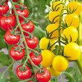 【7歳女の子】野菜の苗を子ども達に!おうち時間の楽しみになるおすすめは?
