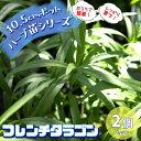【送料無料】フレンチタラゴン 10.5cm 2個セット【おうちで簡単!育てやすい10.5cmポットハーブ苗シリーズ!】根張り…