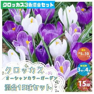 【送料無料】クロッカスオーシャンカラー混合 セット内容:クロッカス3品種/フラワーレコード、ジャンヌダーク、ピックウィック(花色:紫、絞り咲き、白)見計らい チューリップ【花球根 /