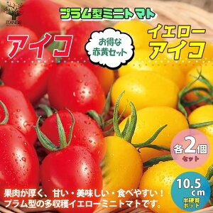【送料無料・即出荷】ミニトマトの苗 アイコ、イエローアイコ 高糖度・カラフル・育てやすい【野菜の苗 10.5cmポット 自根苗/お買い得4個セット】トマト苗 とまと苗 ミニトマト苗 トマト