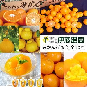 みかん 柑橘 定期便 頒布会 月替わり