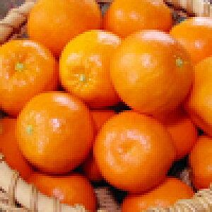 セミノール 訳あり 5kg 送料無料 和歌山 春 の みかん オレンジ 自宅用 手詰め 箱買い ノーワックス ノーブラッシング 特別栽培 詰め合わせ