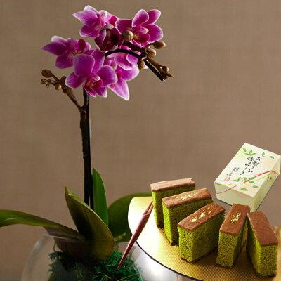 母の日苔胡蝶蘭とカステラセット§生花和風花器付き送料無料カーネーションバラフラワーアレンジメントブーケ花束花とスイーツ