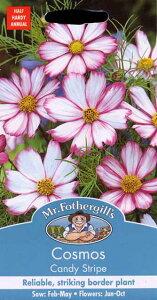 【輸入種子】Mr.Fothergill's Seeds Cosmos Candy Stripe コスモス キャンディ・ストライプ ミスター・フォザーギルズシード