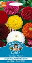 【輸入種子】Mr.Fothergill's Seeds Dahlia Pompom Mixed ダリア ポンポン・ミックス ミスター・フォザーギルズシード