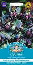 【輸入種子】Mr.Fothergill's SeedsCerinthe major purpurascensセリンセ・メジャー・プルプラセンスミスター・フォザーギルズシード