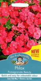 【輸入種子】Mr.Fothergill's SeedsPhlox Pomegranate Beautyフロックス・ポメグラネイト・ビューティミスター・フォザーギルズシード
