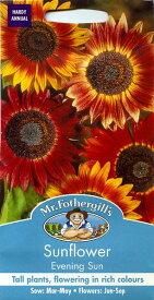 【輸入種子】Mr.Fothergill's SeedsSunflower Evening Sunサンフラワー(ひまわり) イブニング・サン ミスター・フォザーギルズシード