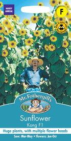 【輸入種子】Mr.Fothergill's SeedsSunflower Kong F1サンフラワー(ひまわり) コング・F1ミスター・フォザーギルズシード