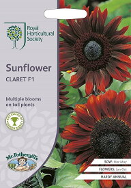 【輸入種子】Mr.Fothergill's SeedsRoyal Horticultural Society Sunflower CLARET F1 RHS サンフラワー クラレット F1 ミスター・フォザーギルズシード