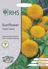 【輸入種子】Mr.Fothergill's Seeds Royal Horticultural Society Sunflower Teddy Bear RHS サンフラワー テディ・ベア ミスター・フォザーギルズシード