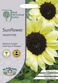 【輸入種子】Mr.Fothergill's SeedsRoyal Horticultural Society Sunflower Valentine RHS サンフラワー バレンタイン ミスター・フォザーギルズシード