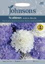 【輸入種子】Johnsons SeedsScabious Musical Preludeスカビオサ ミュージカル・プレリュードジョンソンズシード