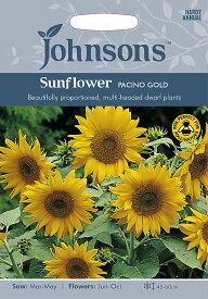 【輸入種子】Johnsons SeedsSunflower Pacino Goldサンフラワー・パチーノ・ゴールドジョンソンズシード