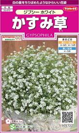 【種子】かすみ草 ジプシーホワイトサカタのタネ