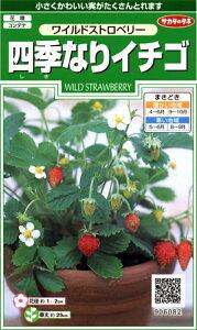 【種子】ワイルドストロベリー 四季なりイチゴ サカタのタネ