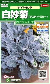 【種子】白妙菊(ダスティーミラー)ダイヤモンドサカタのタネ