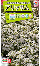 【種子】アリッサム スノークリスタル タキイ種苗のタネ