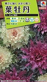 【種子】葉牡丹 さんご混合タキイ種苗のタネ
