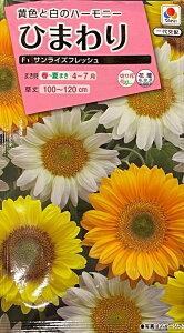 【種子】ひまわり F1 サンライズフレッシュ タキイ種苗のタネ