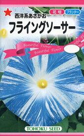 【種子】西洋系あさがお フライングソーサートーホクのタネ