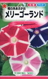 【種子】曜白系あさがおメリーゴーランドトーホクのタネ