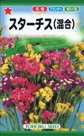 【種子】スターチス(リモニューム)混合トーホクのタネ