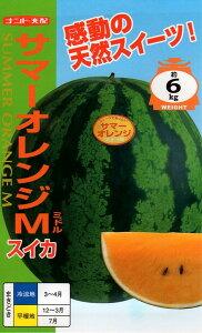【種子】西瓜(スイカ) サマーオレンジM(ミドル) ナント種苗のタネ