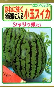 【種子】小玉スイカ シャリっ娘(こ)トーホクのタネ